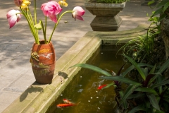 Flor de loto sobre estanque vietnamita