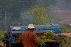 Tareas agrícolas vietnamitas